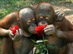 Love is...taking the time to smell the roses together.
