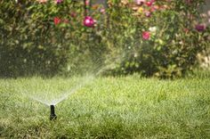 Summer Lawn Watering Tips for a Pest-Free Yard - Vulcan Termite & Pest Control