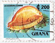Ghana.  LANDMARKS & SHELLS.  LEUCODON COWRIE.  Scott 1357E A243a, Issued 1991 Dec 12, Litho., Perf. 13 3/4 x 13 1/2, 200. /ldb.