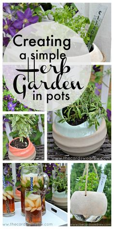 Creating a Simple Herb Garden in Pots
