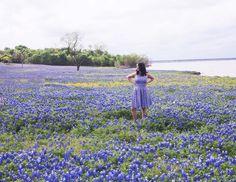 Beautiful Blubonnets in Ennis Texas #bluebonnets #flowers #texas #prettyplaces