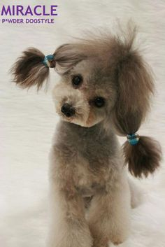 Love this!  I might have to grow my poodles hair out on her ears to do this :)