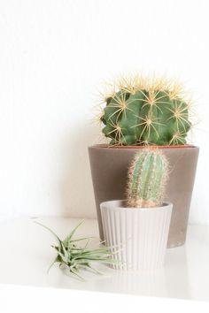 "Die Urban Jungle Bloggers im Oktober - Plant still life ""desert"" http://innenleben-design.com/plant-still-life-desert/"