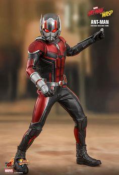 Marvel Ant-Man Sixth Scale Figure by Hot Toys Marvel Comics, Marvel Vs, Marvel Heroes, Black Widow, Hawkeye, Iron Man, Ant Man Scott Lang, Captain America, Hulk