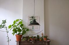 sweet succulents by m willems, via Flickr