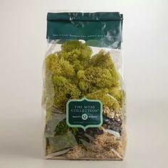 World Market moss vase filler-$5.99