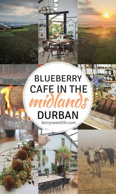 Blueberry Cafe in the Midlands Meander, Durban, South Africa has THE best food in the area! #berrysweetlife #healthyfood #coffeeshops #restaurants #eatout #South Africa #Durban | berrysweetlife.com