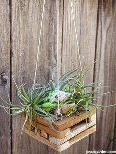 I have many air plants & am always looking for a new way to display them. Check out this easy & inexpensive method of hanging them. A video guides you thru.