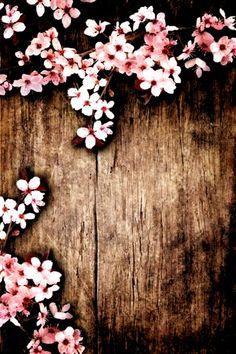 Flower Background Wallpaper, Background Pictures, Flower Backgrounds, Wallpaper Backgrounds, Iphone Wallpaper, Wood Background, Beauty Background, Pretty Backgrounds, Background For Photography