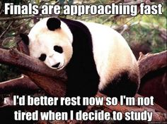 Procrastination Panda - finals are approaching fast id better rest now so im not t