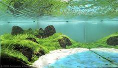 Aquascaping categories--my own take on it. Sea Aquarium, Nano Aquarium, Nature Aquarium, Planted Aquarium, Freshwater Aquarium, Aquarium Ideas, Aquascaping, Aqua Pools, Cool Fish Tanks