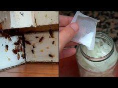 Las cucarachas se mueren en manadas cuando le preparas esto y lo pones en tu casa - YouTube