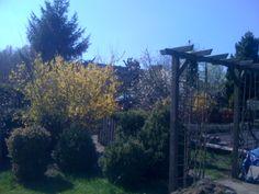 spring '13