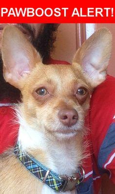 Please spread the word! Rocky was last seen in Hialeah, FL 33010.    Nearest Address: Near W 1st Ave & W 4th St