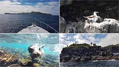 Qué hacer en Islas Galápagos - Excursión a isla de Santa Fe http://www.southamericaperutours.com/southamerica/12-days-wonders-of-machu-picchu-and-galapagos.html