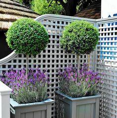 Donice na balkon i taras. Te drewniane skrzynie pomalowano na kolor pasujący do wystroju balkonu i barwy lawendy, posadzonej u stóp kulistych drzewek.