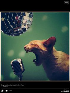 Sing that rock and roll!
