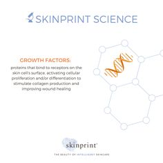 As the name implies, this ingredient helps activate the skin's natural ability to grow cells. #SkinprintScience #naturallyintelligentskincare #skinprint #skincareingredients #growthfactors