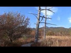 秋の奥日光戦場ヶ原遊歩道を歩く Nikko Senjougahara walking 2012 - YouTube