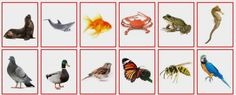 (2015-04) Hvem er hvem (dyr #2)? Fish, Animals, Speech Language Therapy, Pictures, Animales, Animaux, Animal, Animais