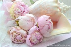 Hey, I found this really awesome Etsy listing at https://www.etsy.com/listing/191462757/peonies-flower-photography-dreamy-pink
