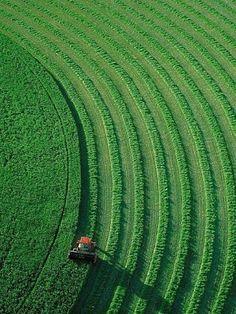 green fields     #design #garden