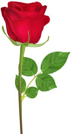 Rose Flower Wallpaper, Wallpaper Nature Flowers, Beautiful Flowers Wallpapers, Rose Flower Pictures, Love Rose Flower, Flower Art, Happy Birthday Rose, Birthday Roses, Beautiful Rose Flowers