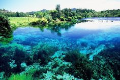 Te Waikoropupu Springs in Golden Bay. Holds the world record for fresh water clarity. #GoldenBay stunning