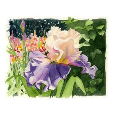 Iris Flower Art Watercolor Painting Print Spring Summer by LaBerge