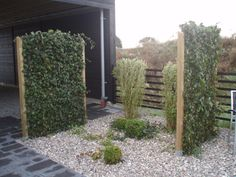 Murgröna Gravel Garden, Garden Trellis, Garden Fencing, Fence Design, Garden Design, Scandinavian Garden, Recycled Garden, Low Maintenance Landscaping, Garden Structures