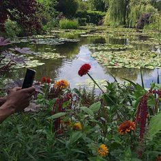 Find images and videos about aesthetic, nature and flowers on We Heart It - the app to get lost in what you love. Mother Earth, Mother Nature, Modern Disney, No Rain, Nature Aesthetic, Belleza Natural, Beautiful Places, Scenery, Adventure