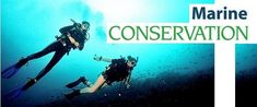 10 amazing marine conservation opportunities