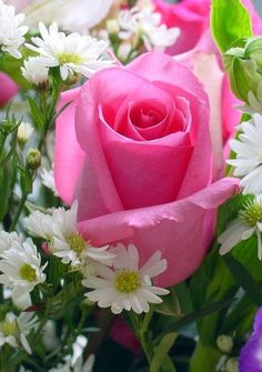 Pink Rose Wallpaper pictures in the best available resolution.