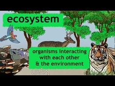 ▶ What is an ecosystem? | Ecology and Environment | the virtual school - YouTube