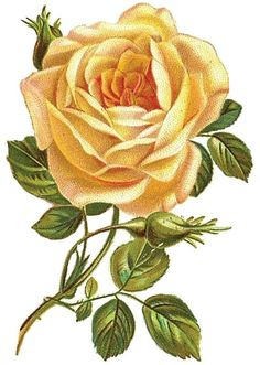 Decoupage Vintage, Decoupage Paper, Vintage Diy, Flowers Nature, Colorful Flowers, Beautiful Flowers, Rose Clipart, Flower Clipart, Vintage Flowers Wallpaper