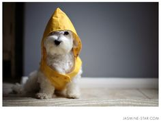 Pup will be fully prepared f0r rain because I b0ught him a yellow rain slicker. I don't think he's a fan, but when it comes to d0g fashion, beauty is pain.