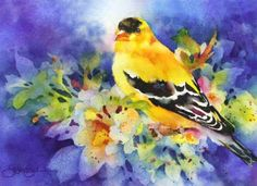 """Golden Boy-Gold Finch"" - by Susan Crouch"