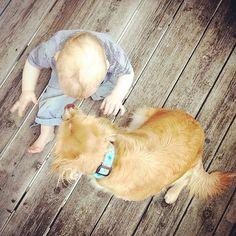 Zweisamkeit ❤️ #baby #dog #love #latergram Corgi, Baby, Instagram Posts, Animals, Pictures, Animales, Corgis, Animaux, Babys