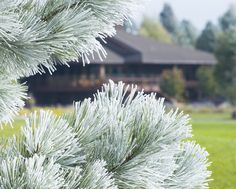 #Sunriver #Oregon first #frost of the season