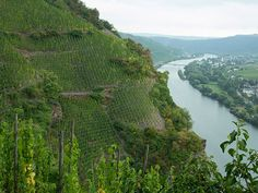 Simply Beautiful!! Vineyard at Ürziger Würzgarten on the Mosel River in Germany, best Reisling ever!