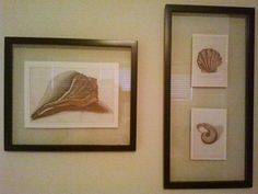 Pictures of sea shells printed off the internet, mounted in floating frames from Pottery Barn.