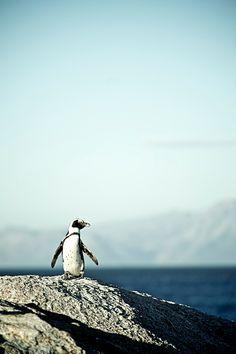 penguin ocean life animals