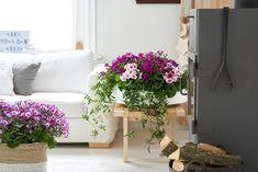 Actueel - Winterbloeiers: de woonplanten van februari - https://www.tuincentrumoverzicht.nl/actueel/5997/winterbloeiers-de-woonplanten-van-februari