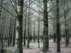 Photo by Szera Balazs Belgium, Trees, Plants, Tree Structure, Plant, Wood, Planets