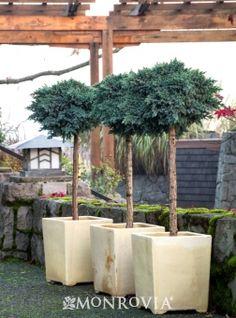 Personal statement for graduate school japanese juniper