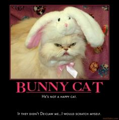 Image detail for - bunny-cat-silly-cat-humans-die-cubby-demotivational-poster-1284946105 ...