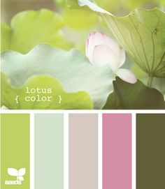 lotus color
