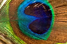 Photographer Rolf Hackemann's Gallery Abstract on #500px Peacock Pictures, Macro Pictures, Rainbow Images, Wall Art Prints, Canvas Prints, Fotografia Macro, Macro Shots, Mandala Tapestry, Peacock Feathers