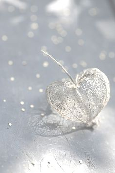 Gorgeous - delicate & fragile as First Love Heart In Nature, Heart Art, Lace Heart, Art Nature, Nature Images, Nature Photos, I Love Heart, Heart Pics, Jolie Photo