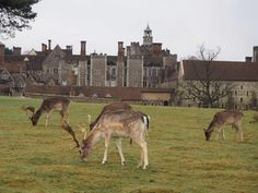 National Trust, Places To Go, Interior Decorating, England, Decoration, Projects, House, Animals, Travel Advice